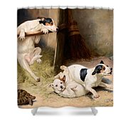 Rough And Tumble Shower Curtain