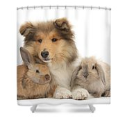 Rough Collie Pup With Two Young Rabbits Shower Curtain