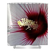 Ruby And White Hibiscus Shower Curtain