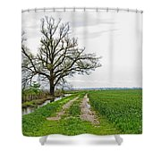 Rural Trees Vii Shower Curtain