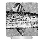 Salmon Shower Curtain by Granger