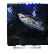 Sand Tiger Shark, Blue Zoo Aquarium Shower Curtain