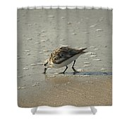 Sandpiper Hunting On Assateague Island Maryland Shower Curtain
