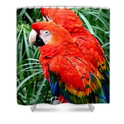 Scalet Macaw Shower Curtain