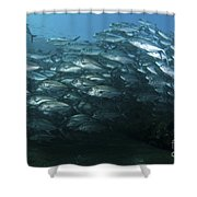 School Of Trevally Swimming By, Bali Shower Curtain