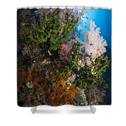 Sea Fan On Soft Coral In Raja Ampat Shower Curtain