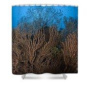 Sea Fan Seascape, Belize Shower Curtain