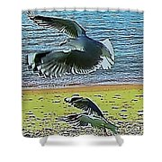 Sea Gulls In Flight  Shower Curtain