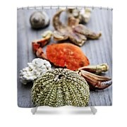 Sea Treasures Shower Curtain by Elena Elisseeva