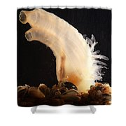 Sea Vase Shower Curtain