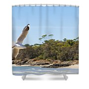 Seagull Spreads Its Wings On The Beach Shower Curtain