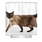 Seal Point Siamese Cat Shower Curtain