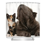 Shar Pei Puppy And Tortoiseshell Kitten Shower Curtain
