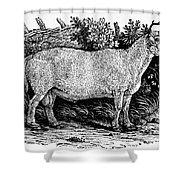 Sheep, C1800 Shower Curtain