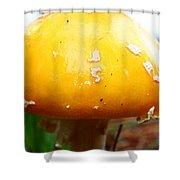 Shiny Top Shower Curtain