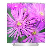 Showy Vygie Shower Curtain