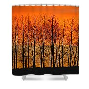 Silhouette Of Trees Against Sunset Shower Curtain