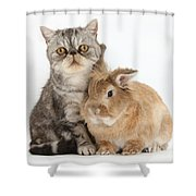 Silver Tabby Cat And Lionhead-cross Shower Curtain
