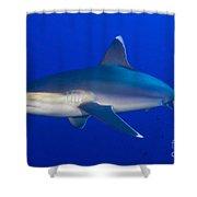Silvertip Shark, Kimbe Bay, Papua New Shower Curtain