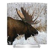 Snow Bull Shower Curtain