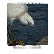 Snowy Egret 8 Shower Curtain