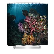 Soft Coral And Sunburst In Raja Ampat Shower Curtain