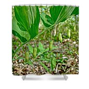 Solomon's Seal Wildflower - Polygonatum Commutatum Shower Curtain