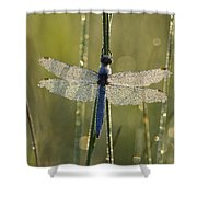 Southern Skimmer Orthetrum Brunneum Shower Curtain