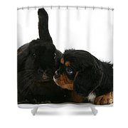 Spaniel And Rabbit Shower Curtain