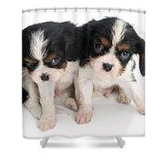 Spaniel Puppies Shower Curtain