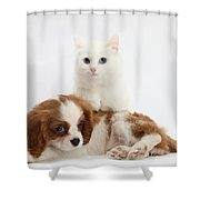 Spaniel Puppy And Kitten Shower Curtain