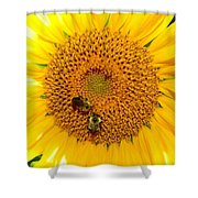 Spider And The Bees Shower Curtain