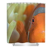Spinecheek Anemonefish In Anemone Shower Curtain
