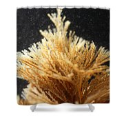 Spiral-tufted Bryozoan Shower Curtain