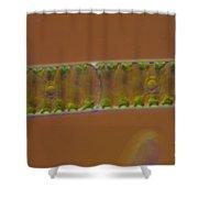 Spirogyra Sp. Algae Lm Shower Curtain