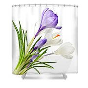 Spring Crocus Flowers Shower Curtain