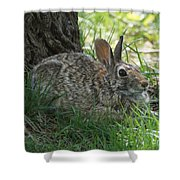 Spring Time Rabbit Shower Curtain