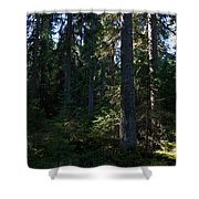 Spruces Shower Curtain