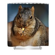 Squirrel Eating Corn Shower Curtain