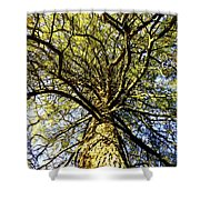 Stalwart Pine Tree Shower Curtain