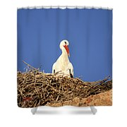 Storks In Marrakech Shower Curtain