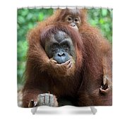 Sumatran Orangutan Pongo Abelii Mother Shower Curtain