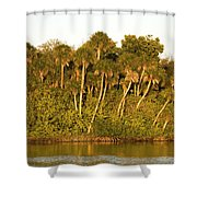 Sunset Palm Trees Shower Curtain