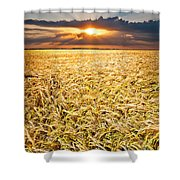Sunset Wheat Shower Curtain