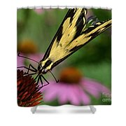 Swallowtail Shower Curtain