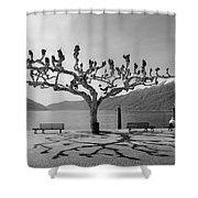 sycamore trees in Ascona - Ticino Shower Curtain
