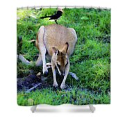 Symbiotic Relationship Shower Curtain