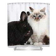 Tabby-point Birman Cat And Black Rabbit Shower Curtain