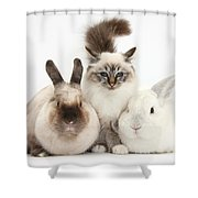 Tabby-point Birman Cat And Rabbits Shower Curtain