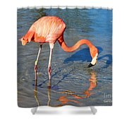 Taking A Drink Shower Curtain